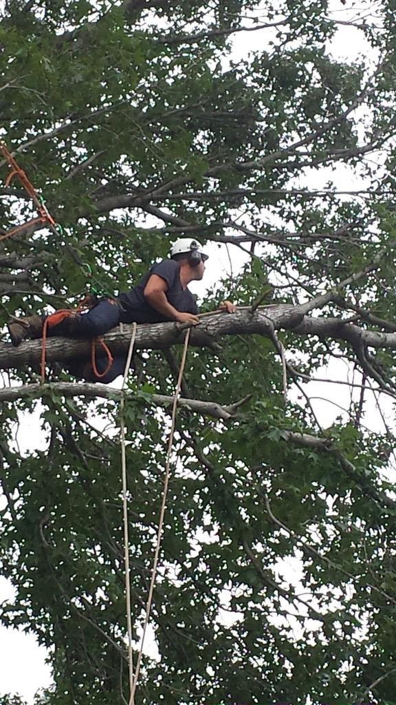 tree pruning pymble