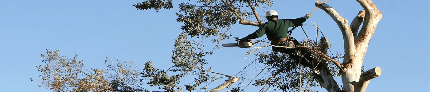 tree-removal-australia