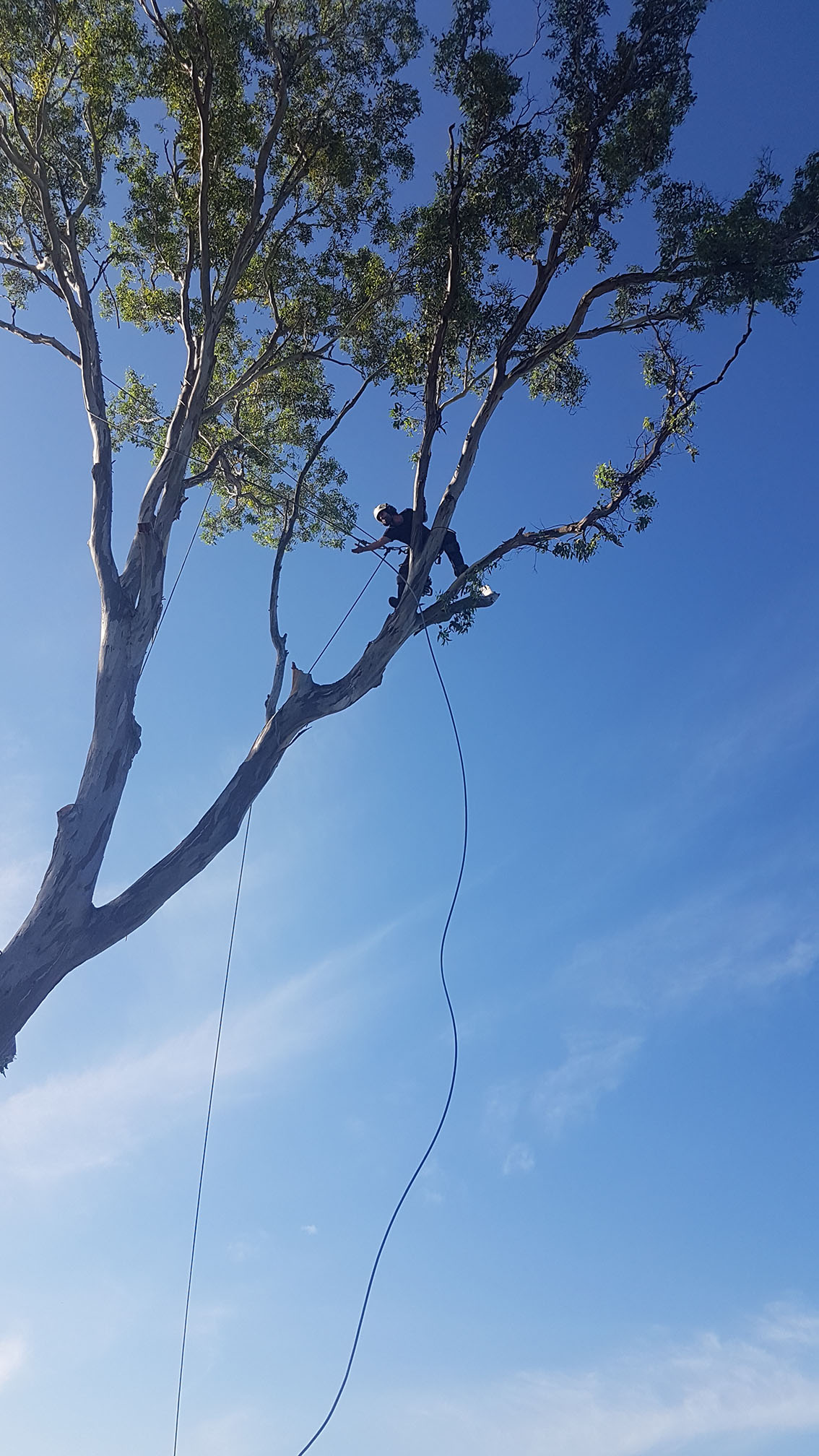 tree lopping sydney