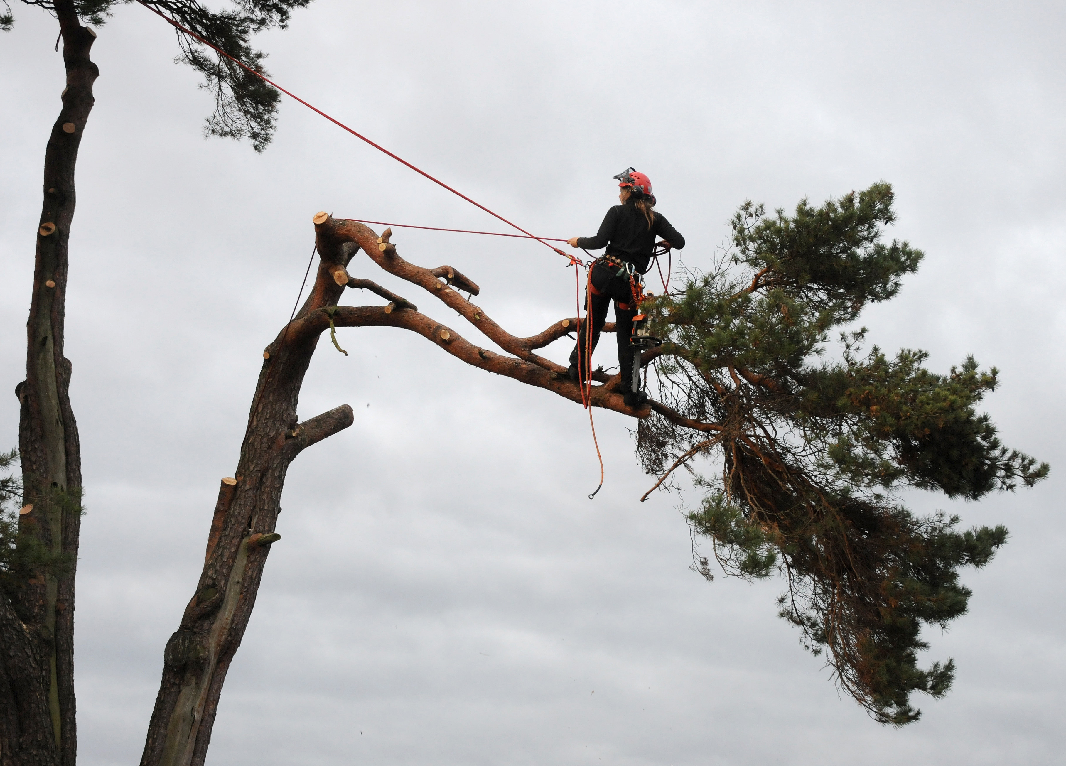 tree lopping services sydney