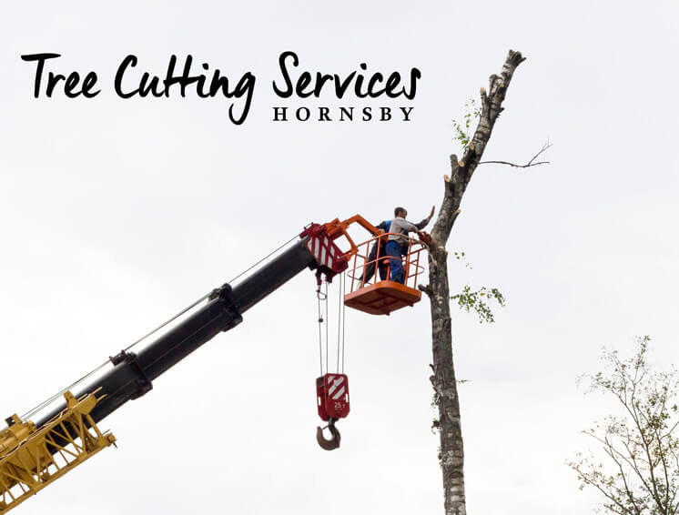Tree Cutting Services Hornsby