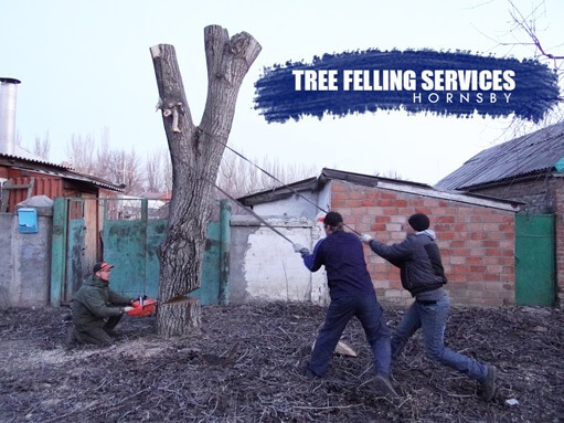 Tree Felling Services Hornsby