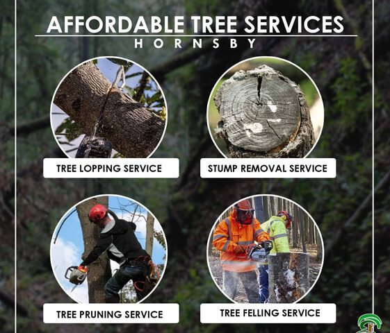 Affordable Tree Cutting Service Hornsby