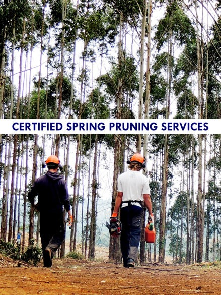 Certified Spring Pruning Services