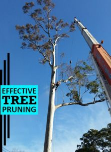 Effective Tree Pruning