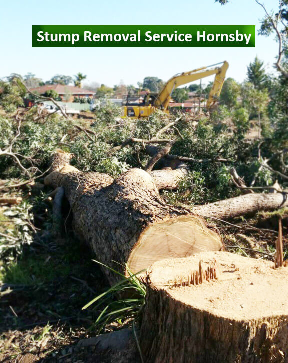 Stump Removal Service Hornsby