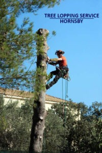 Tree Lopping Service Hornsby