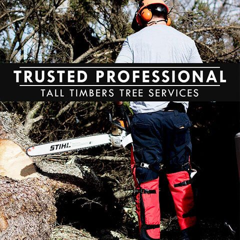 Trusted Professional Tall Timbers Tree Services