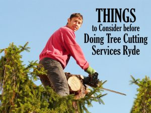 Things to consider before doing tree cutting services Ryde