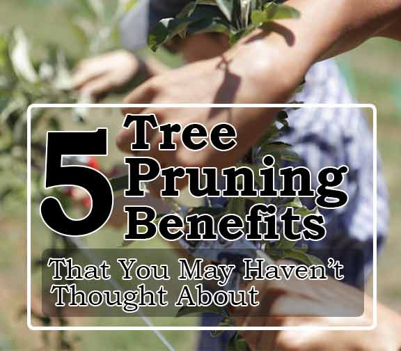 5 Tree Pruning Benefits That You May Haven't Thought About