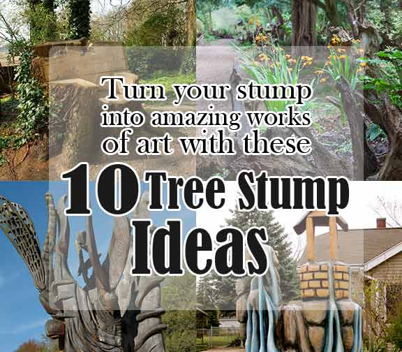 10 Tree Stump Ideas to Turn Stumps Into an Amazing Work of Ar