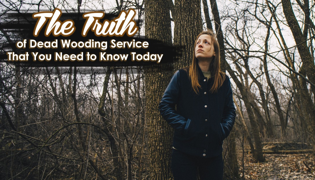 The Truth of Dead Wooding Service That You Need to Know Today