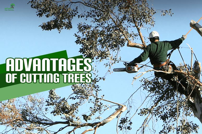 advantages-of-cutting-trees