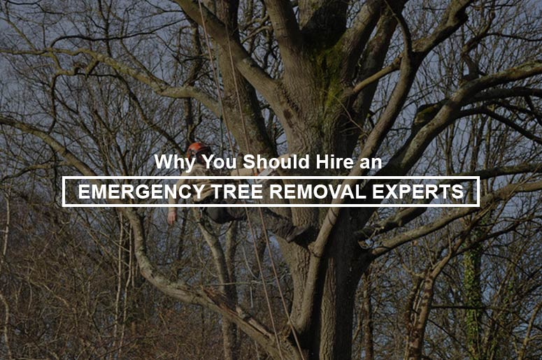 emergency-tree-removal-experts