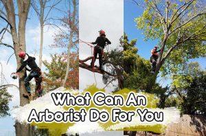 local certified arborist
