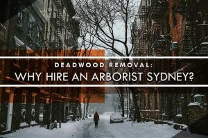 Arborist Sydney