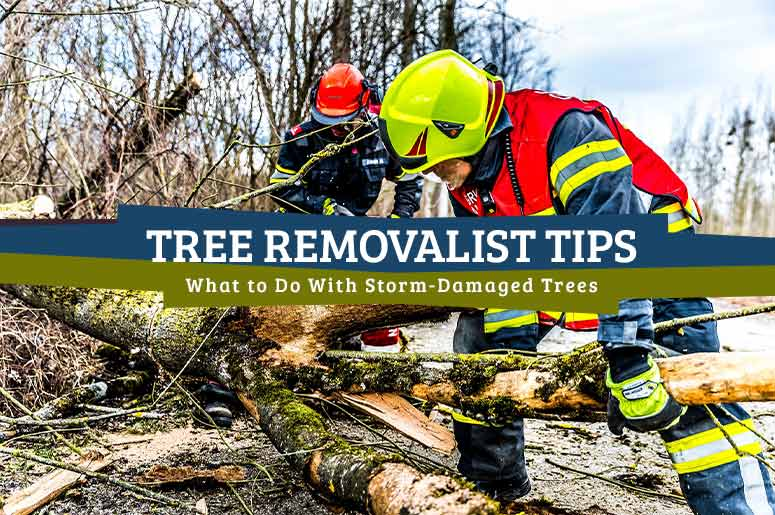 Tree Removalist