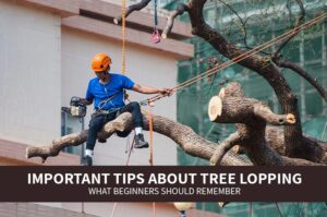 Important Tips About Tree Lopping