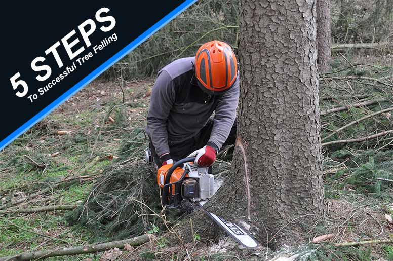 5 Steps To Successful Tree Felling