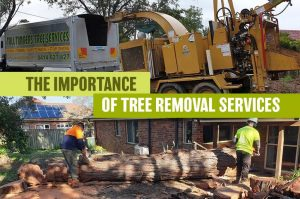 the importance of tree removal services