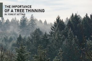 the importance of tree thinning