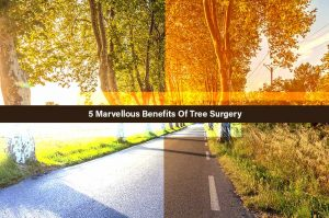 Tree Surgery Benefits