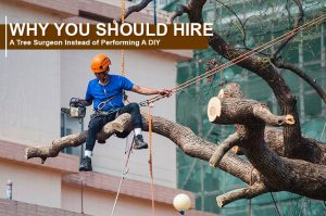 Why You Should Hire A Tree Surgeon