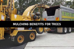 mulching benefits for trees