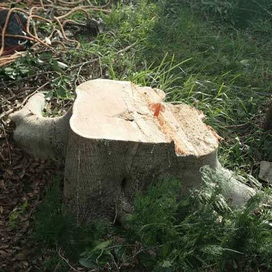 stump-removal-wahroonga-390x390